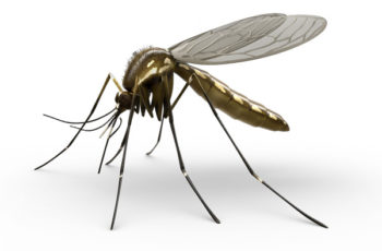 """O que significa """"Coar um mosquito e engolir um camelo""""?"""