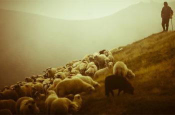 O pastor não trabalha